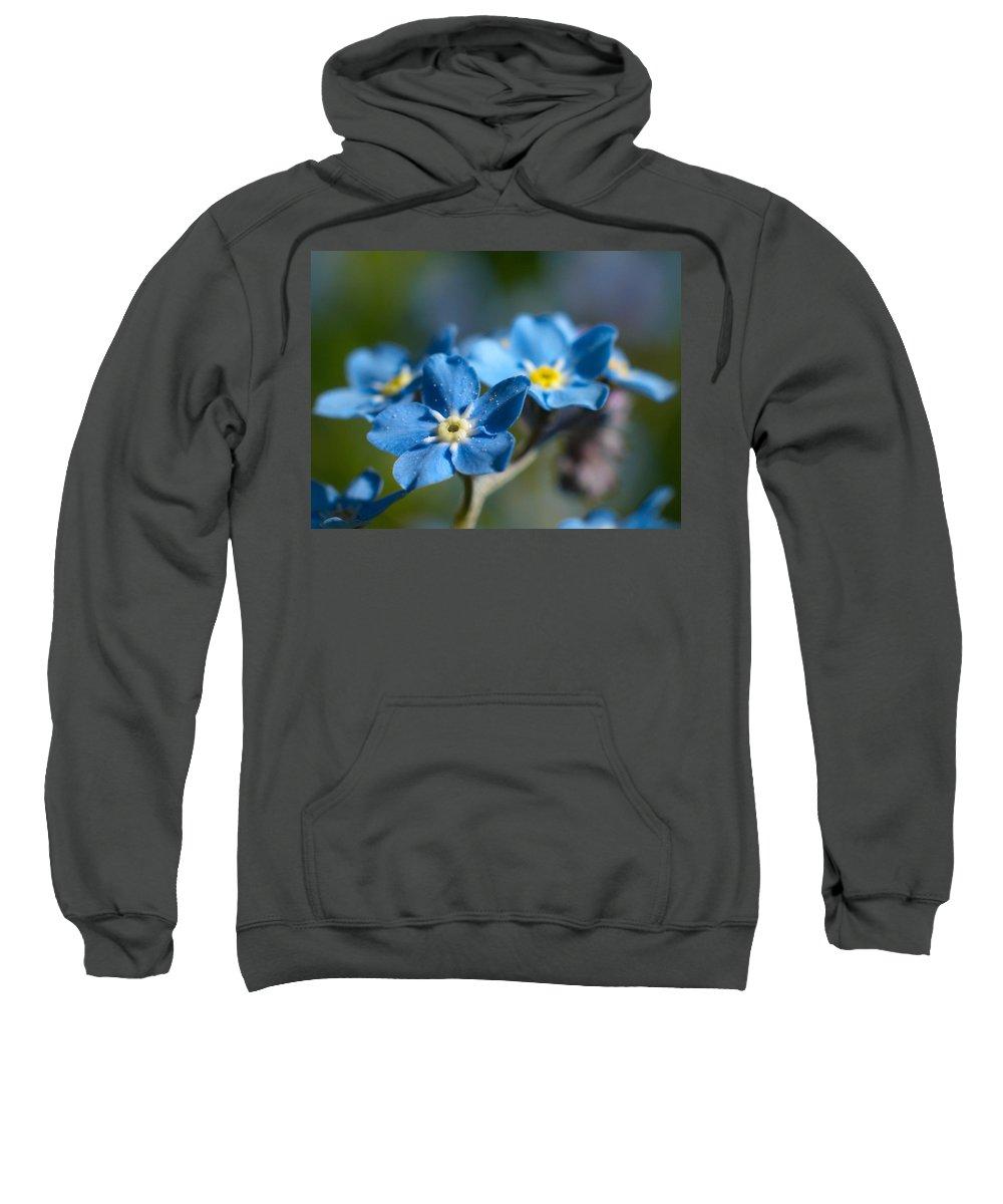 Lehtokukka Sweatshirt featuring the photograph Forget -me-not 3 by Jouko Lehto