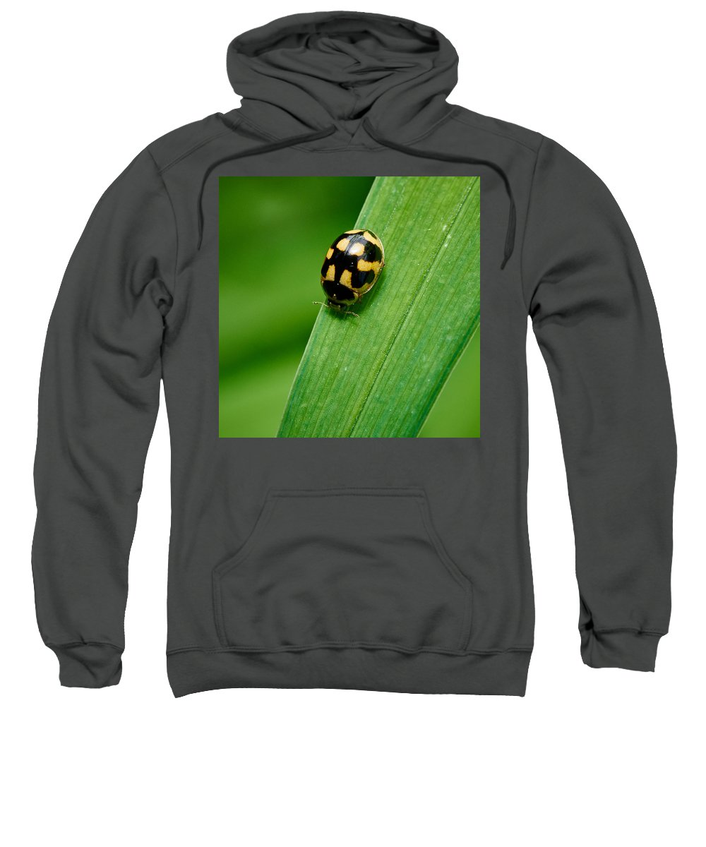 Finland Sweatshirt featuring the photograph Fourteen Spotted Lady Beetle by Jouko Lehto