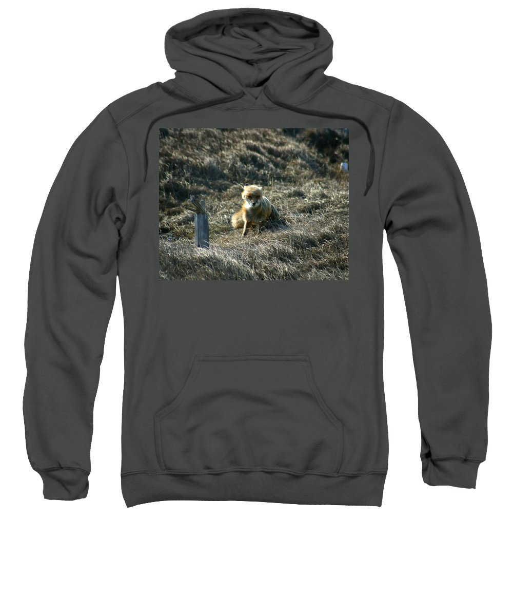 Red Fox Sweatshirt featuring the photograph Fox In The Wind by Anthony Jones