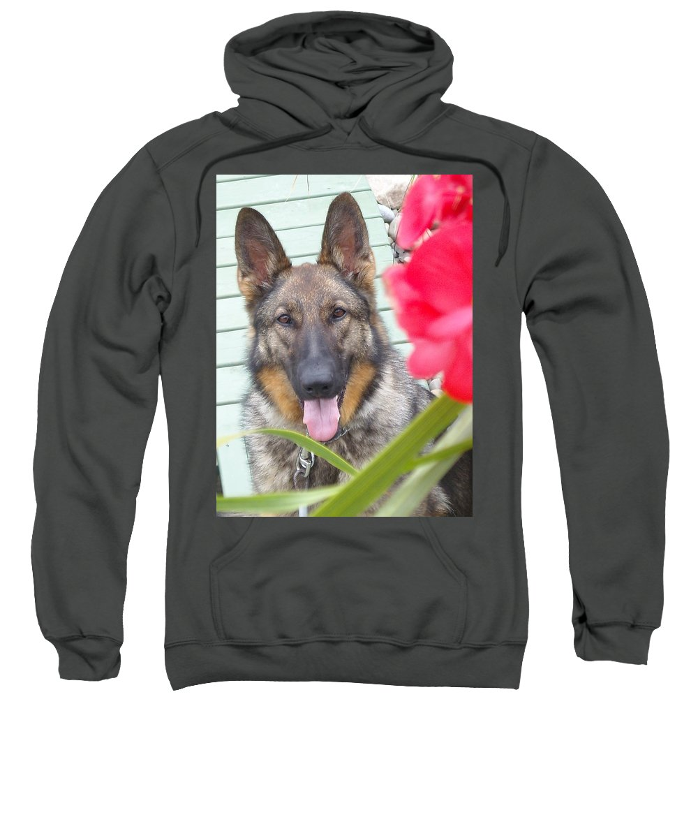Dog Sweatshirt featuring the photograph Foxy by Line Gagne