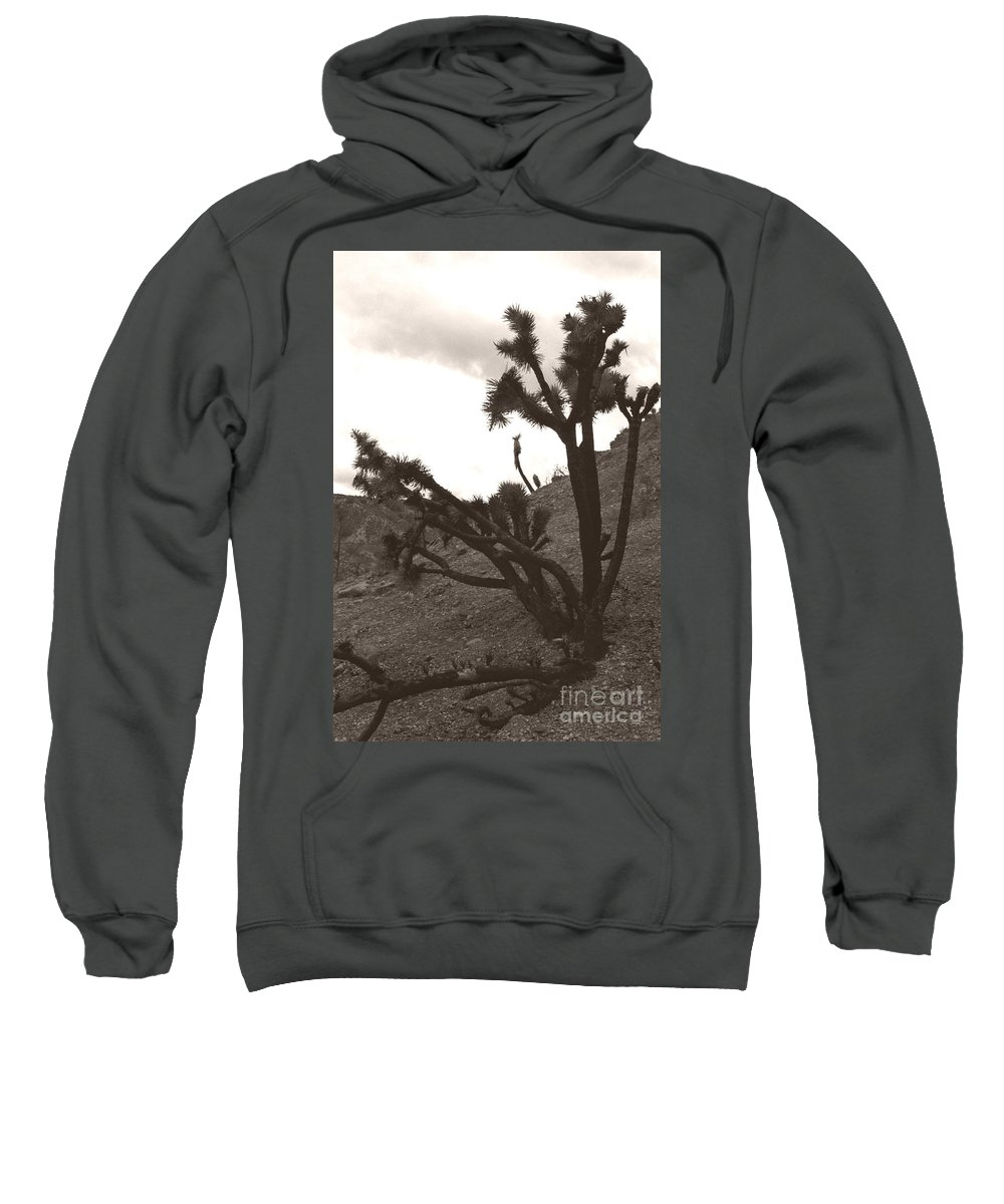 Sweatshirt featuring the photograph Framed By The Branches by Heather Kirk