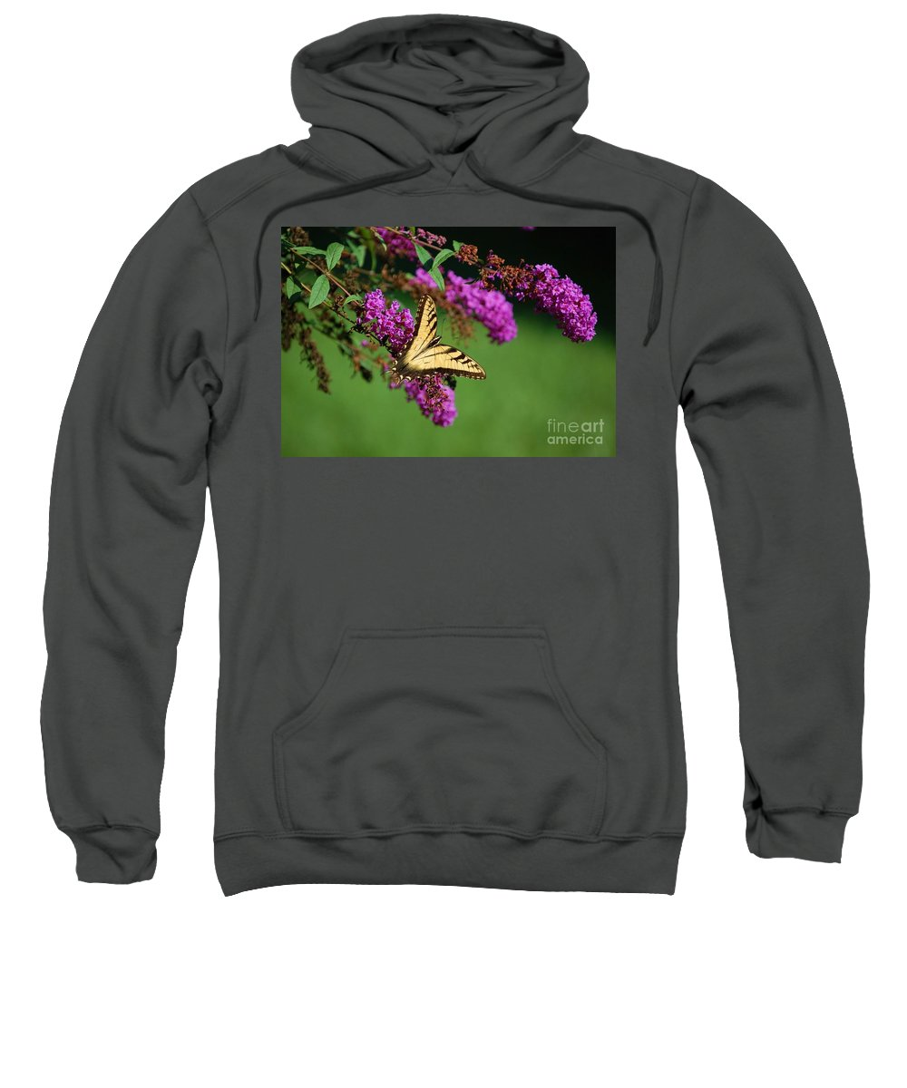Butterfly Sweatshirt featuring the photograph Freedom by Debbi Granruth