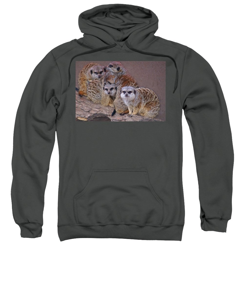 Mer Cats Sweatshirt featuring the photograph Freezing Meer Cats by Heather Coen