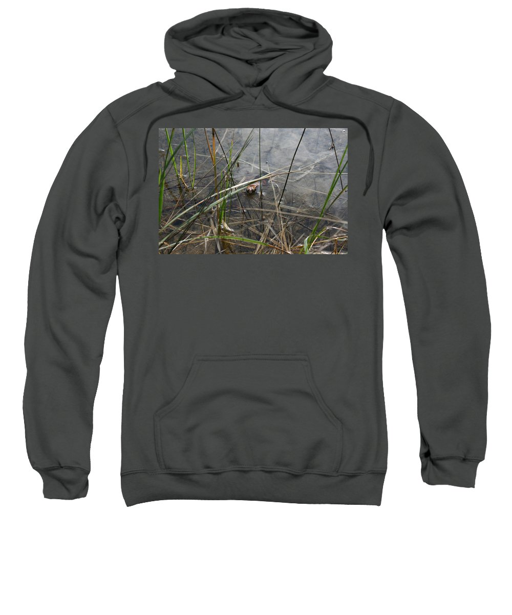 Frog Water Mother Nature Wild Reptile Eyes Lake Marsh Sweatshirt featuring the photograph Frog Home by Andrea Lawrence