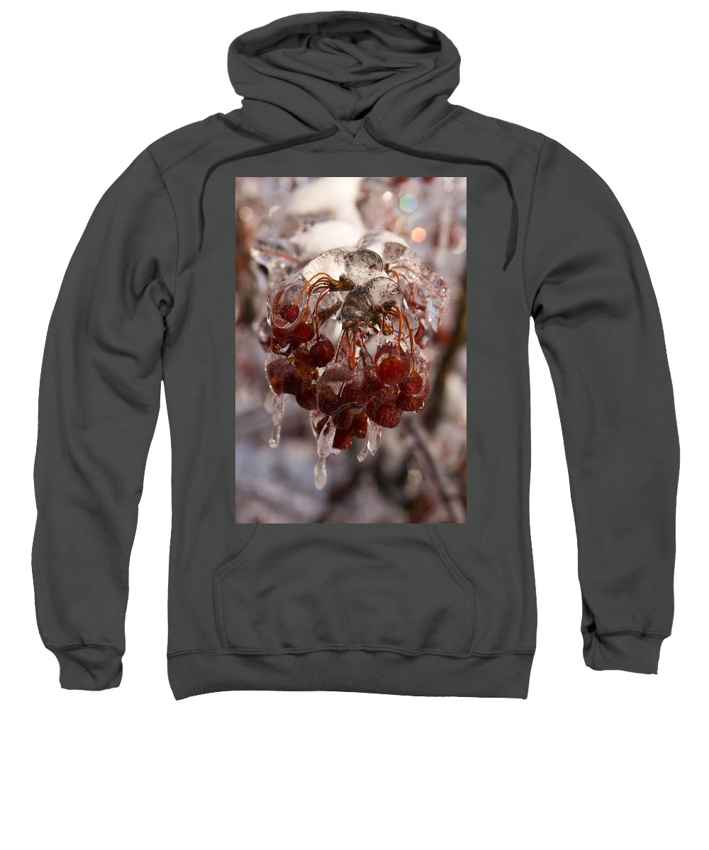 Berry Berries Red Frozen Ice Icy Snow White Spark Tree Winter Storm Glare Sun Reflection Sweatshirt featuring the photograph Frozen Berries by Andrei Shliakhau