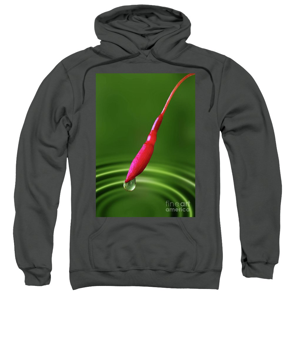 Fuchsia Magellanica Sweatshirt featuring the photograph Fuchsia Bud And Droplet by John Edwards