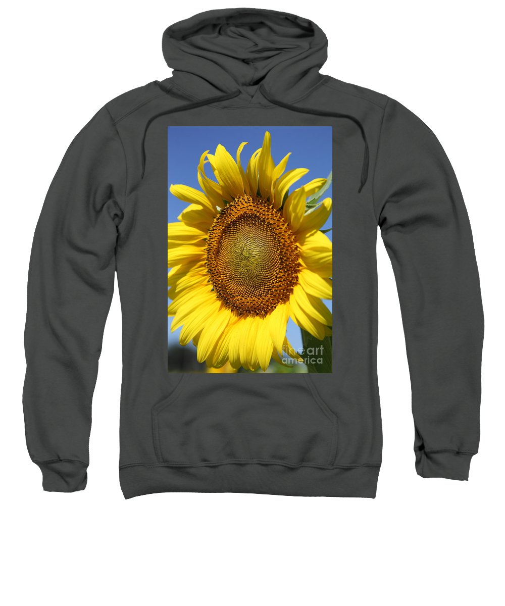 Sunflowers Sweatshirt featuring the photograph Full by Amanda Barcon