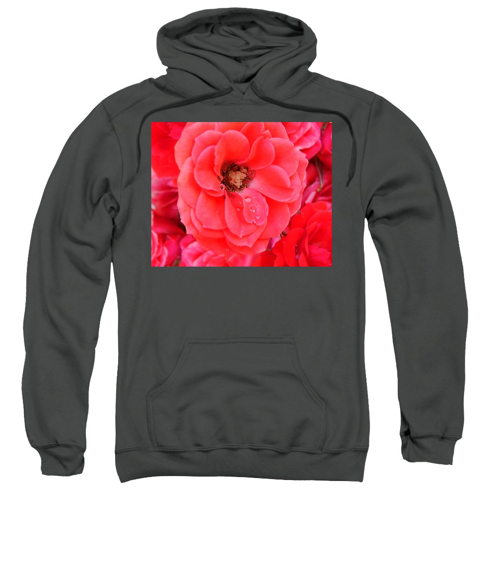 Roses Sweatshirt featuring the photograph Full Bloom by Anthony Jones