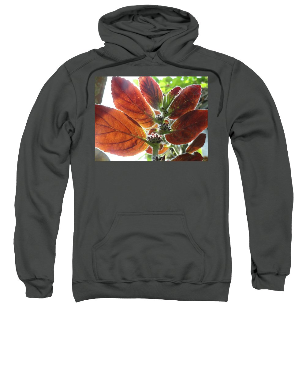 Red Sweatshirt featuring the photograph Furry Flora 2 by Trish Hale
