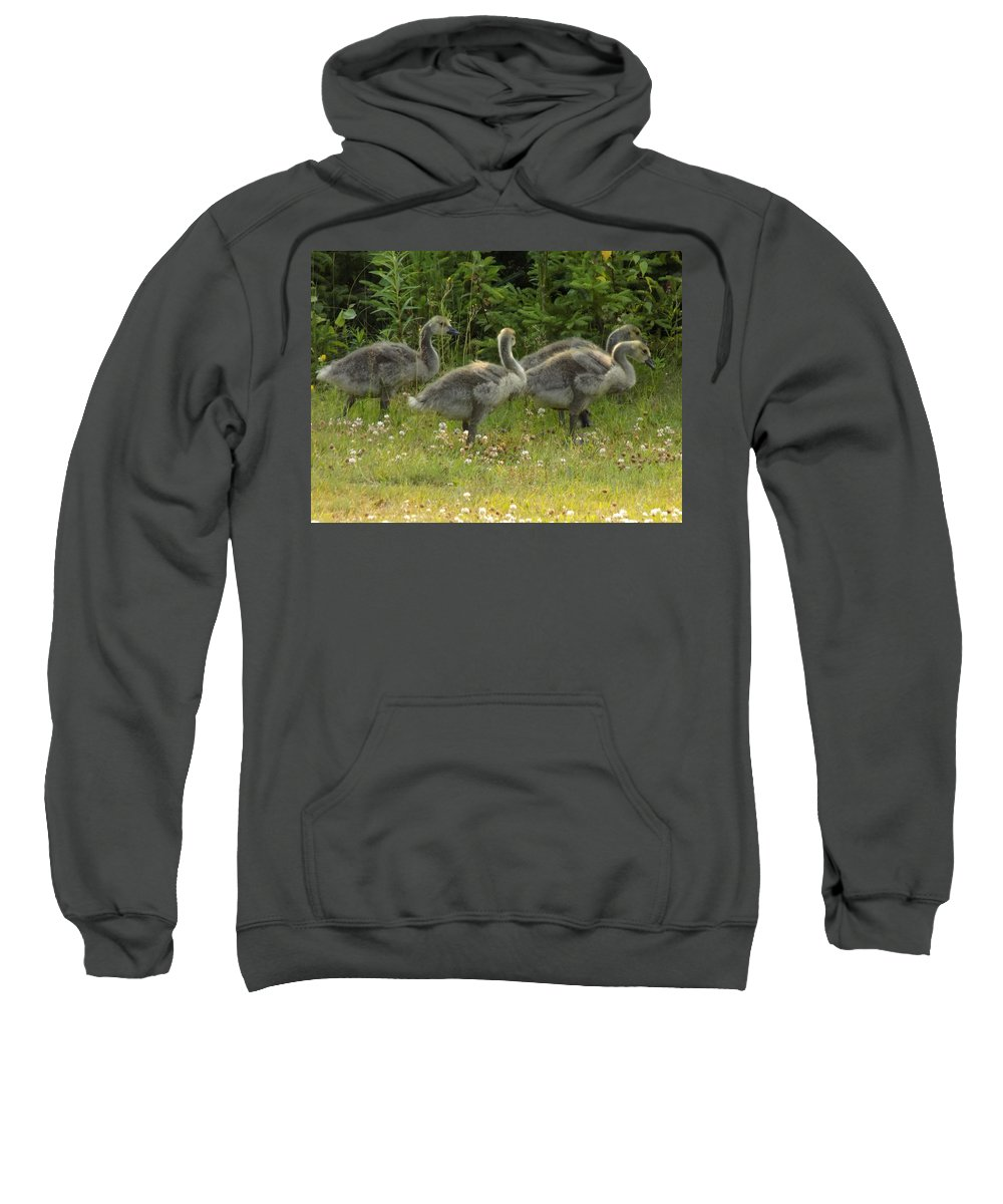Canadian Geese Sweatshirt featuring the photograph Fuzzy Fowlings by William Tasker