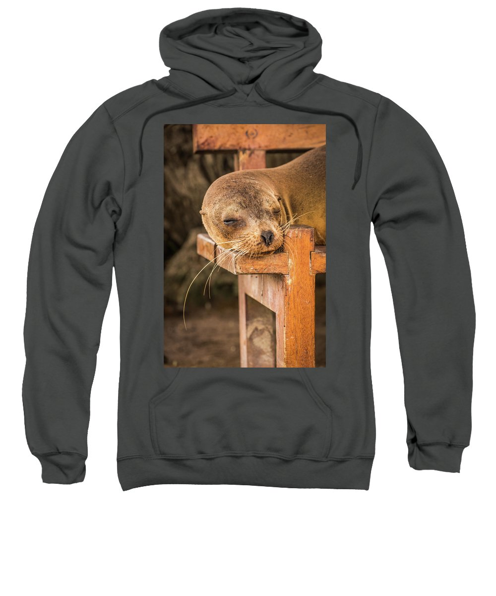 Ecuador Sweatshirt featuring the photograph Galapagos Sea Lion Sleeping On Wooden Bench by Ndp
