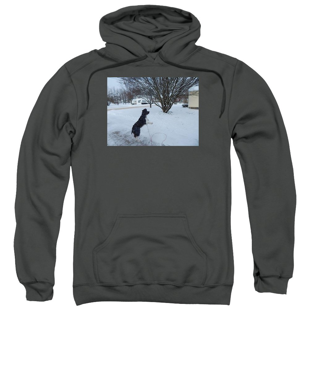 Sweatshirt featuring the photograph Galaxy Dog by Avery McCullough
