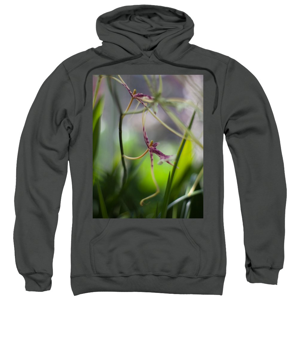 Flower Sweatshirt featuring the photograph Garden Connections by Mike Reid