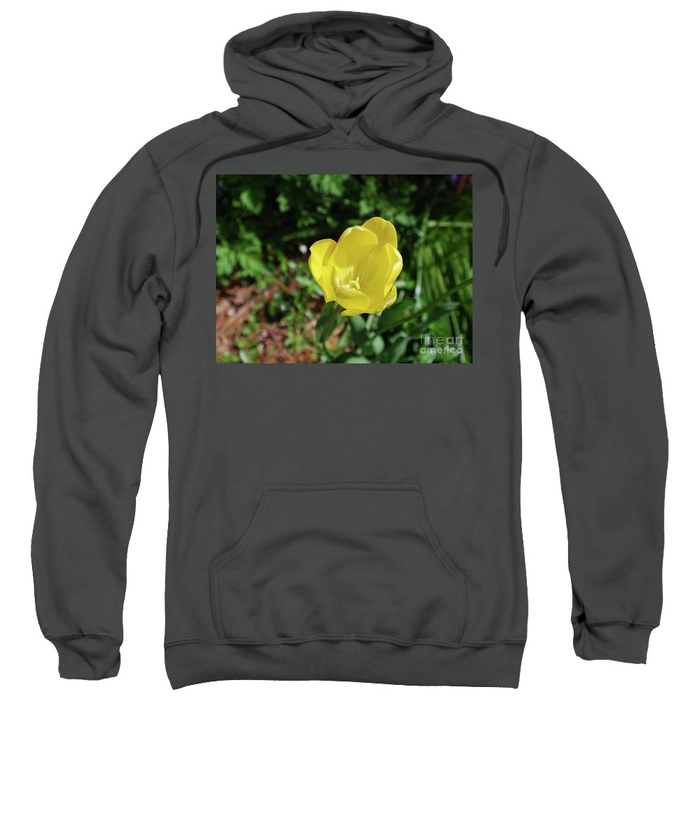 Tulip Sweatshirt featuring the photograph Garden With Beautiful Flowering Yellow Tulip In Bloom by DejaVu Designs