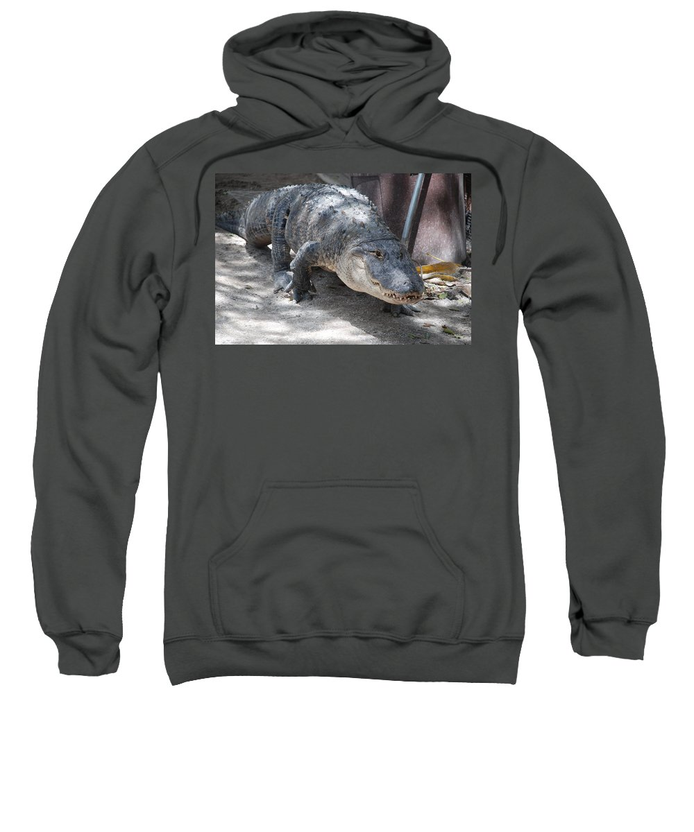 Alligator Sweatshirt featuring the photograph Gator On The Move by Rob Hans