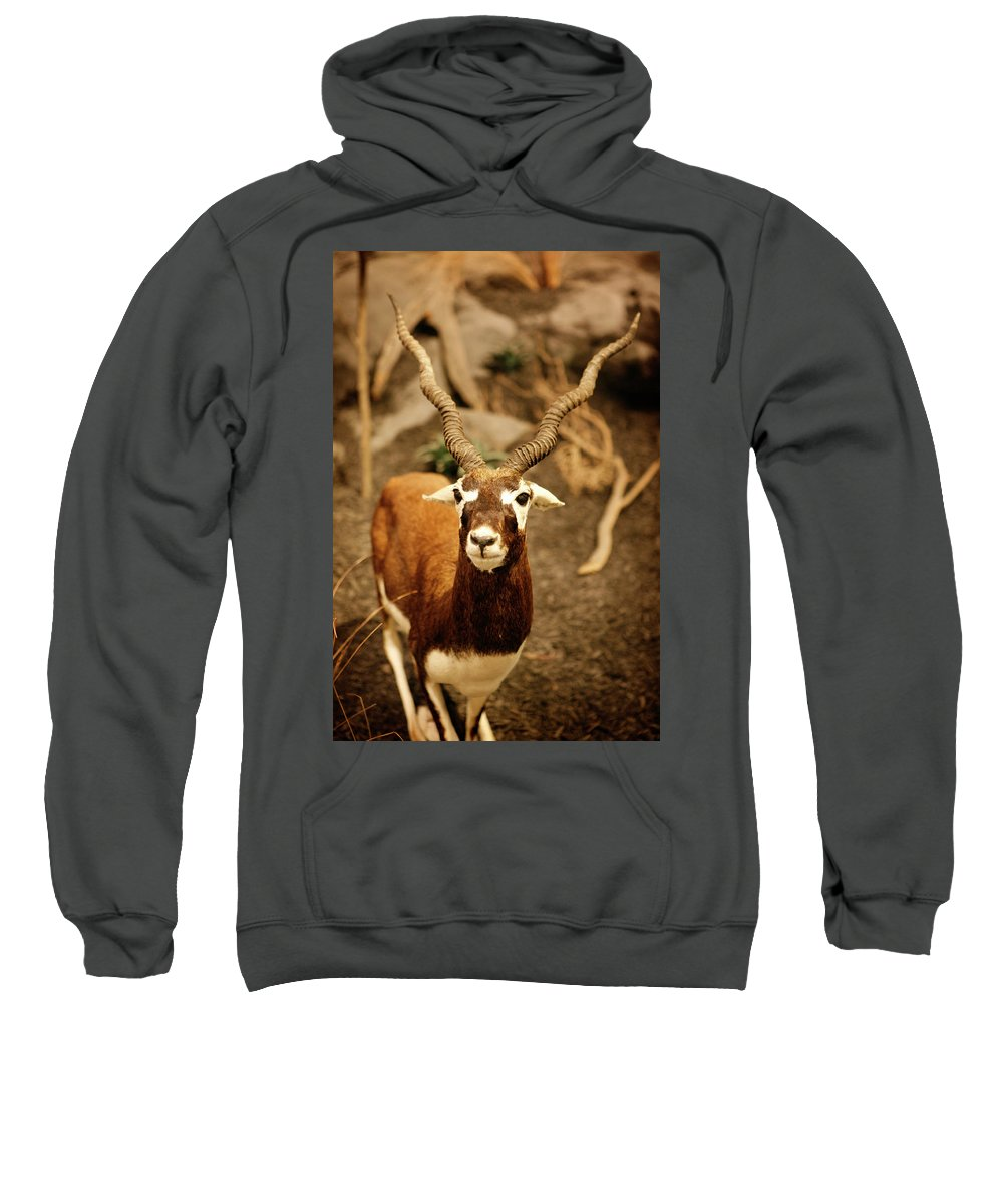 Wild Sweatshirt featuring the photograph Gazelle by Marilyn Hunt