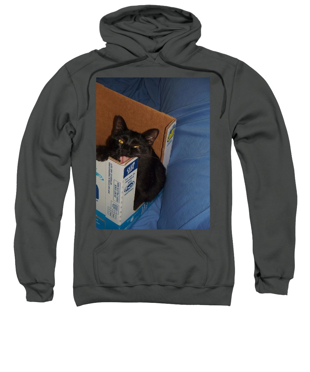 Cat Sweatshirt featuring the photograph Gepptto The Cat by Eric Schiabor
