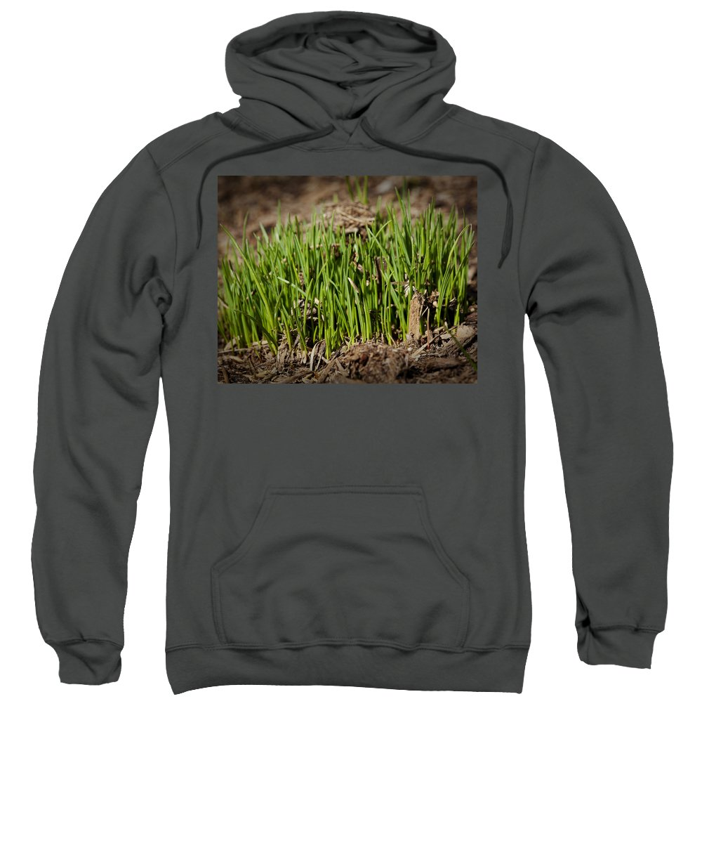 Grass Sweatshirt featuring the photograph Germination by Kelley King