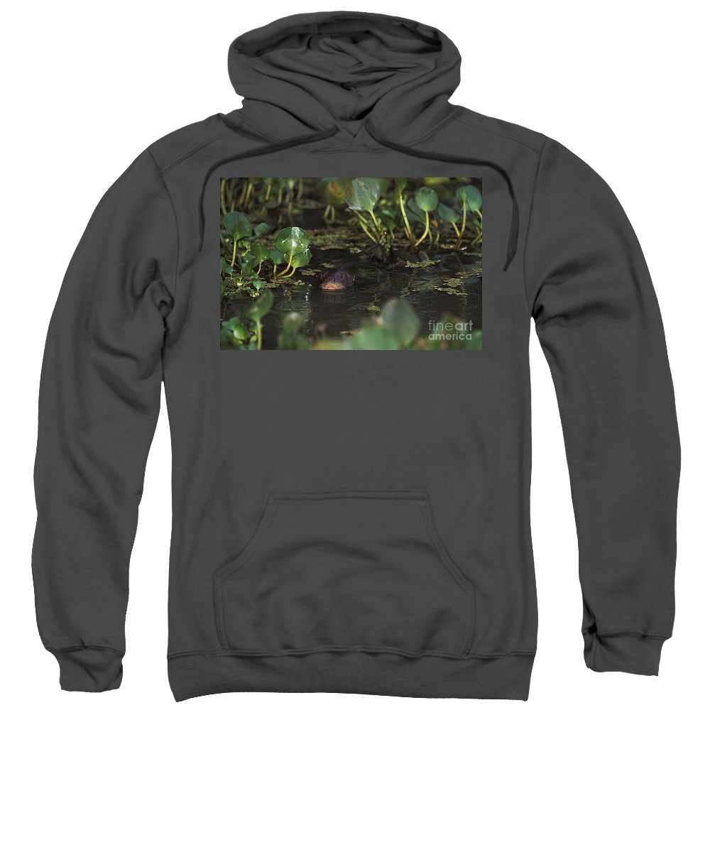 Adult Sweatshirt featuring the photograph Giant Otter Pteronura Brasiliensis by Gerard Lacz
