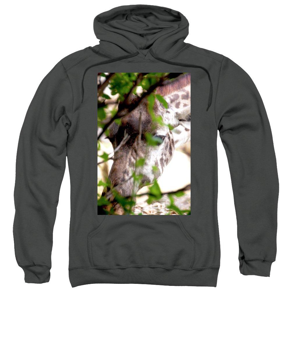Giraffe Sweatshirt featuring the photograph Giraffe by Steven Natanson