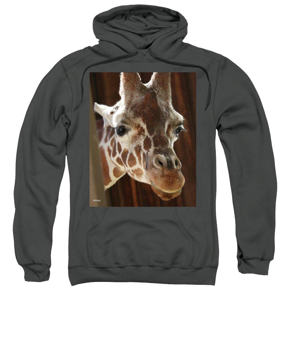 Maryland Sweatshirt featuring the photograph Giraffe Taking A Peek by Ronald Reid