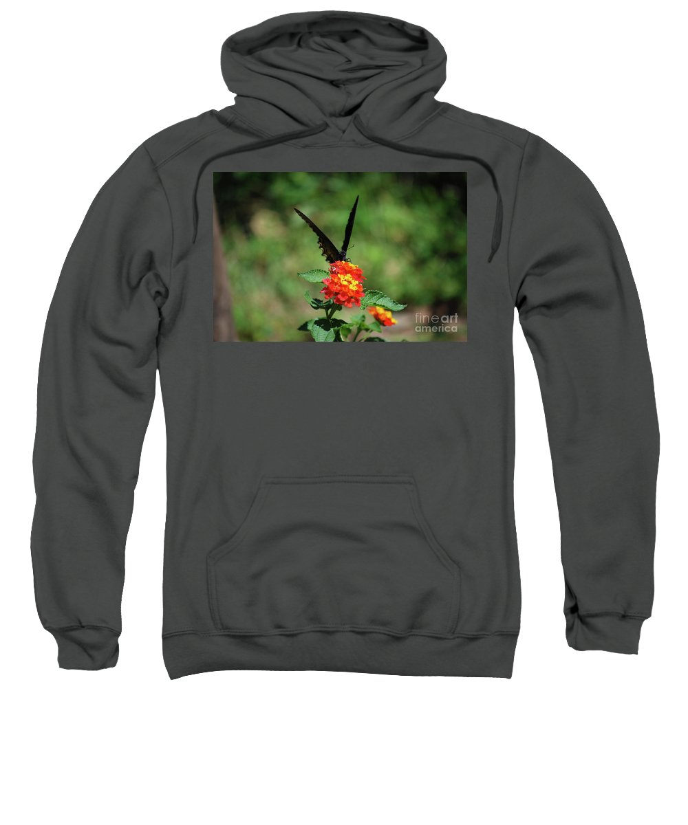 Swallowtail Sweatshirt featuring the photograph Give Me A V by Lori Tambakis
