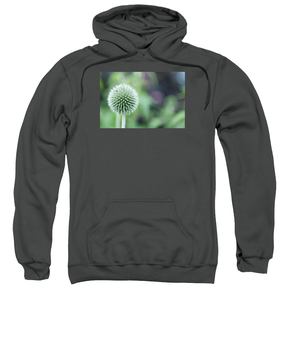 Globe Thistle Sweatshirt featuring the photograph Globe Thistle by Helen Northcott