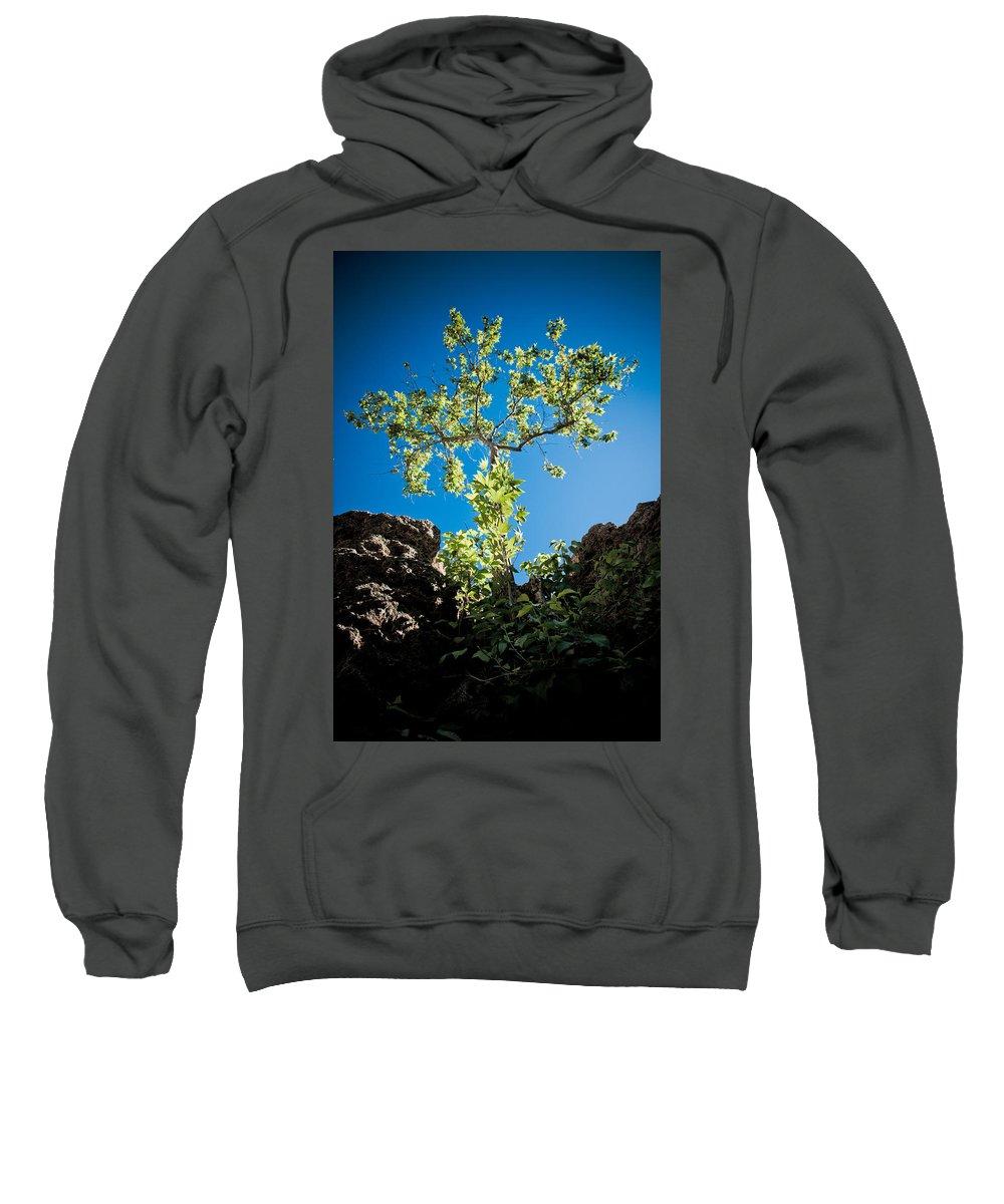 Tree Sweatshirt featuring the photograph Glowing Tree by Scott Sawyer