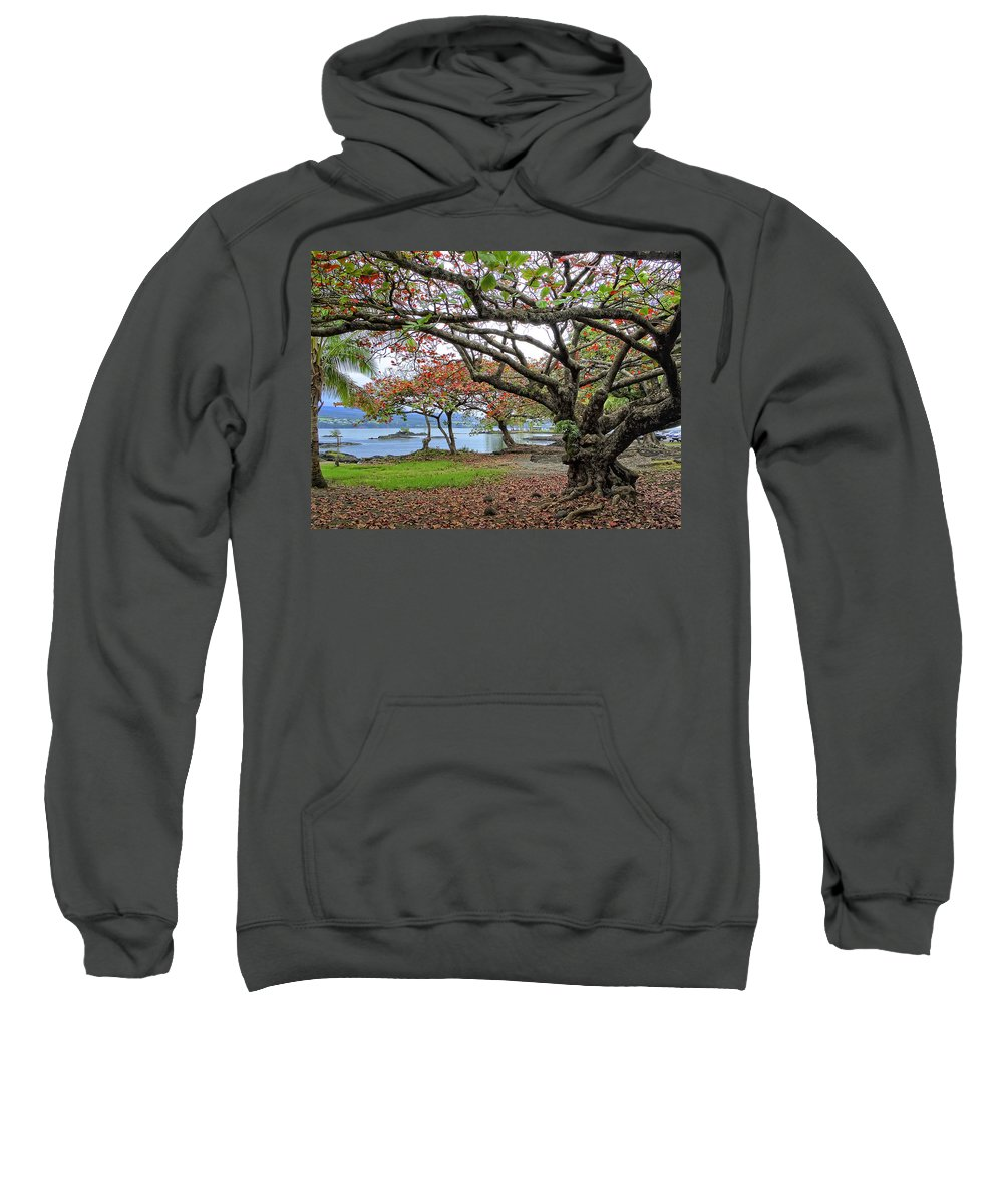 Hawaii Sweatshirt featuring the photograph Gnarly Trees Of South Hilo Bay - Hawaii by Daniel Hagerman