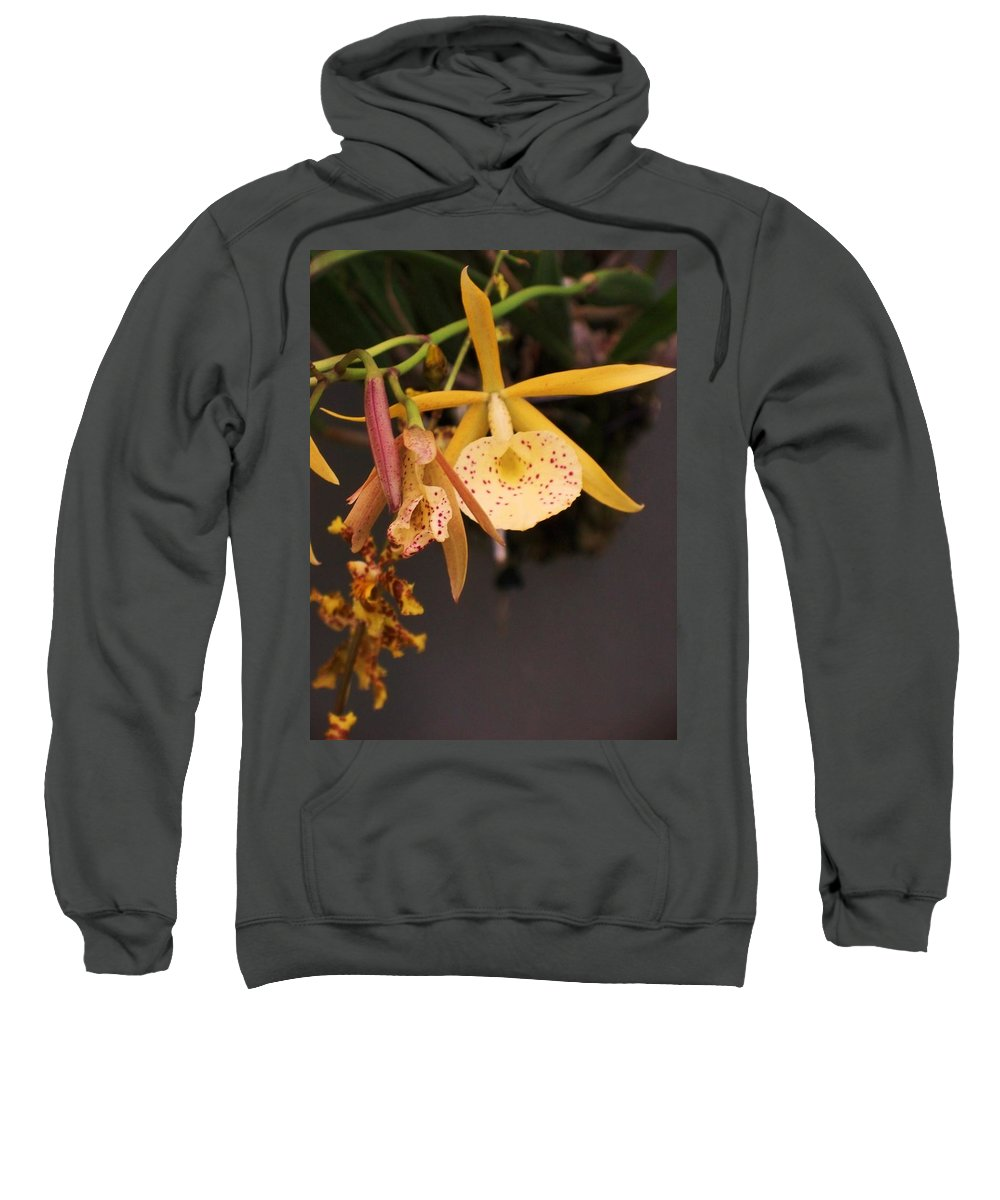 Gold Sweatshirt featuring the photograph Gold Yellow Orchid by Eric Schiabor