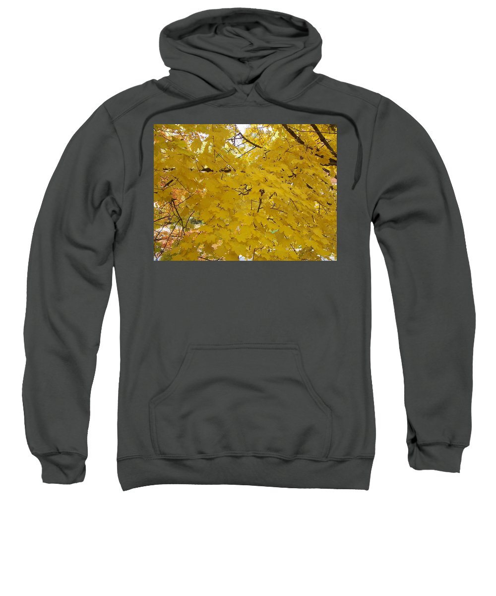 Fall Autum Trees Maple Yellow Sweatshirt featuring the photograph Golden Canopy by Karin Dawn Kelshall- Best