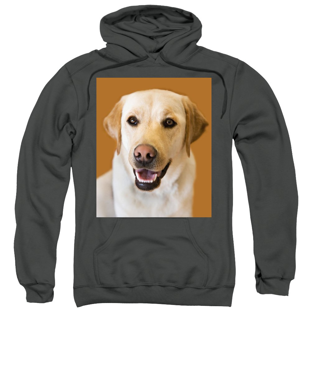 Lab Sweatshirt featuring the photograph Golden Lab by Marilyn Hunt