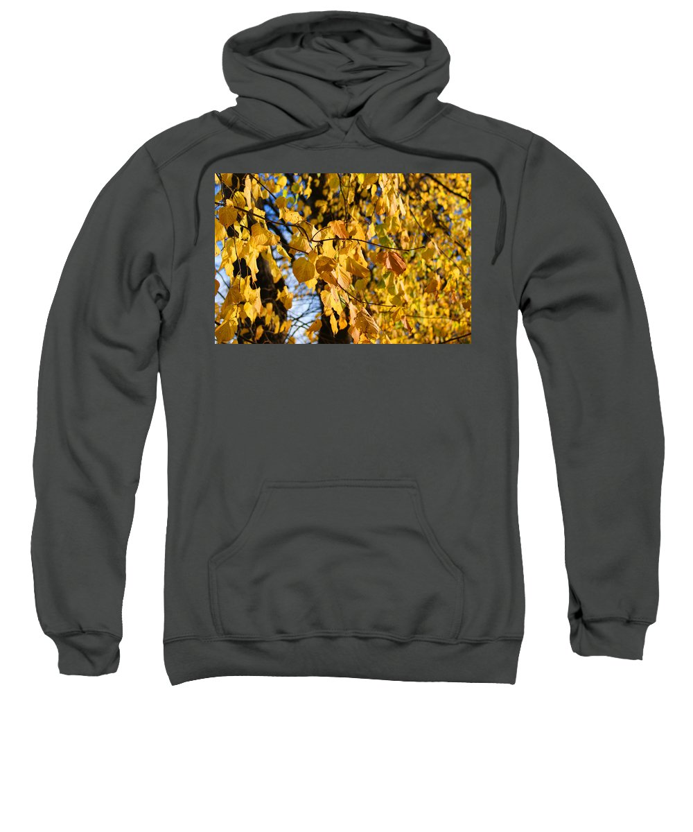 Autumn Sweatshirt featuring the photograph Golden Leaves by Carol Lynch