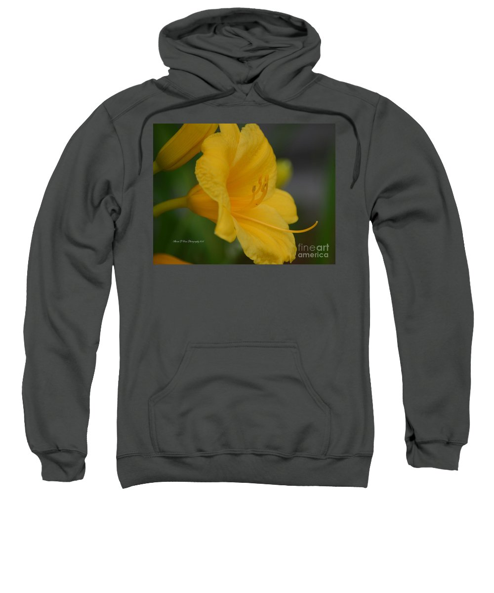 Golden Lily 18-2 Sweatshirt featuring the photograph Golden Lily 18-2 by Maria Urso