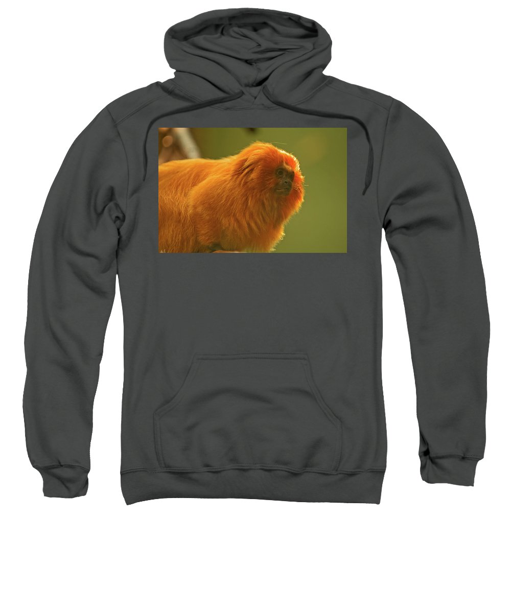 golden Lion Tamarin Sweatshirt featuring the photograph Golden Lion Tamarin by Paul Mangold