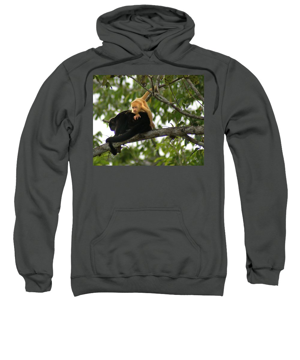 Monkey Sweatshirt featuring the photograph Golden Monkey by Heather Coen