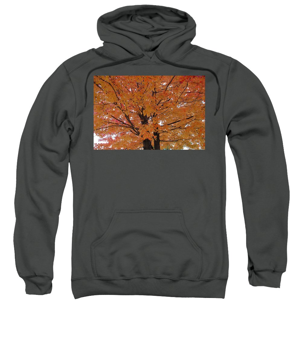 Autumn Sweatshirt featuring the photograph Golden Tree by Aimee L Maher ALM GALLERY