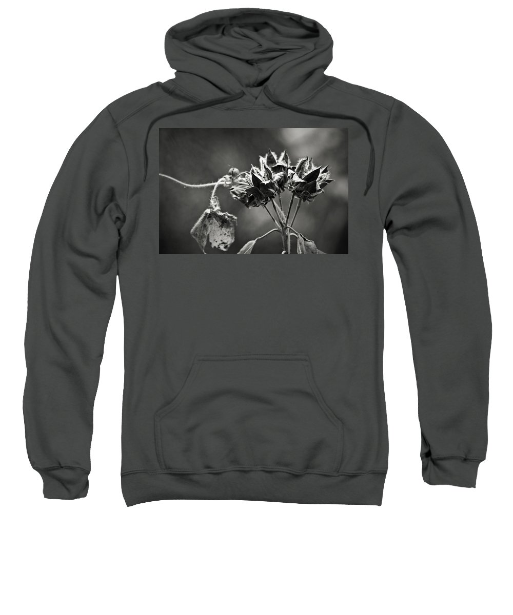 Flower Sweatshirt featuring the photograph Gone To Seed Hibiscus by Teresa Mucha