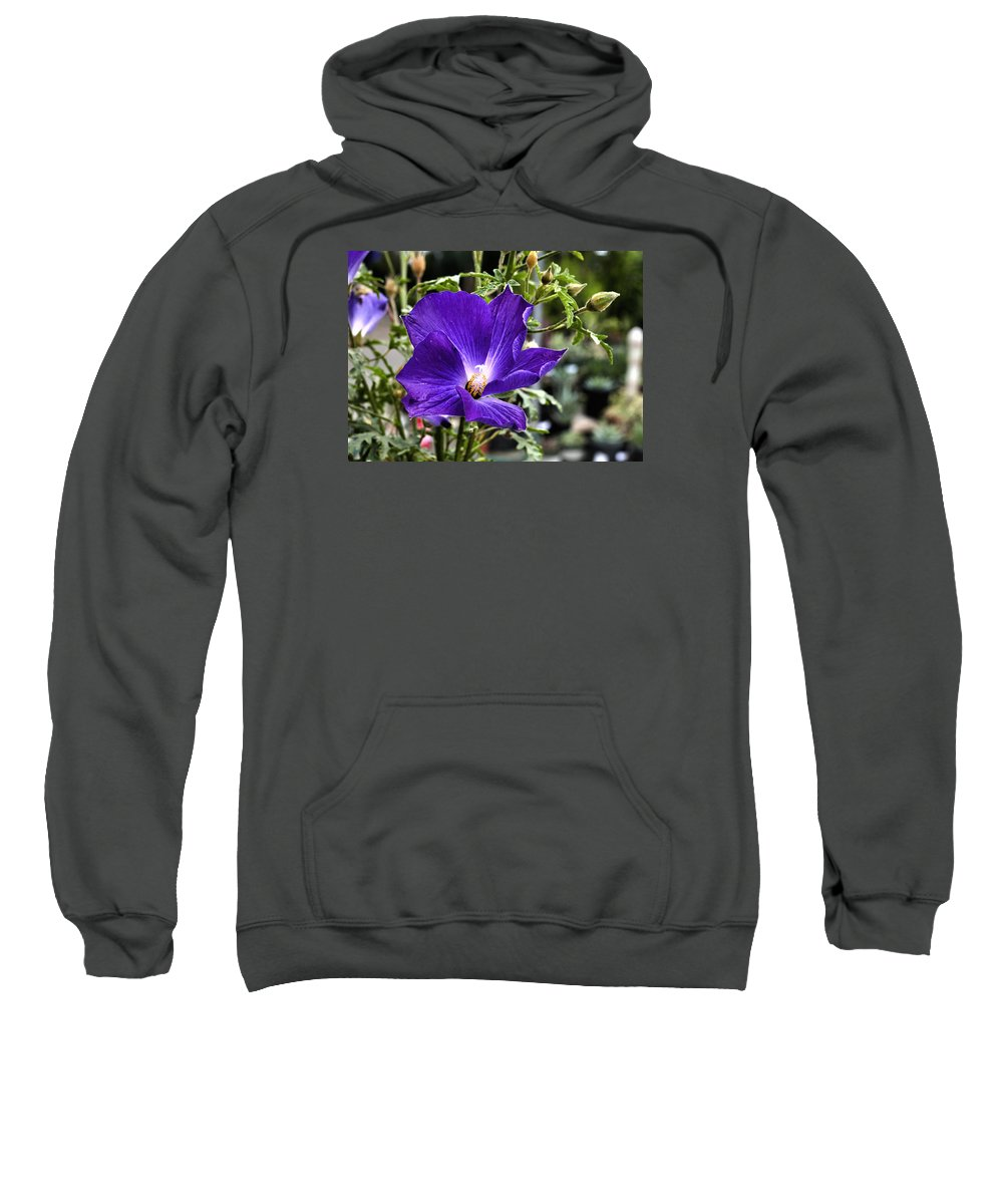 Flower Sweatshirt featuring the photograph Good Morning Glory by Richard Belcastro
