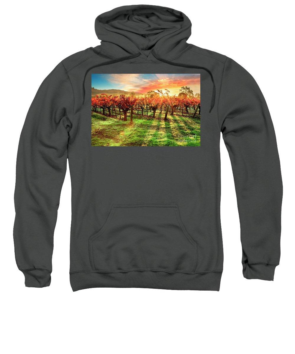Sonoma Sweatshirts
