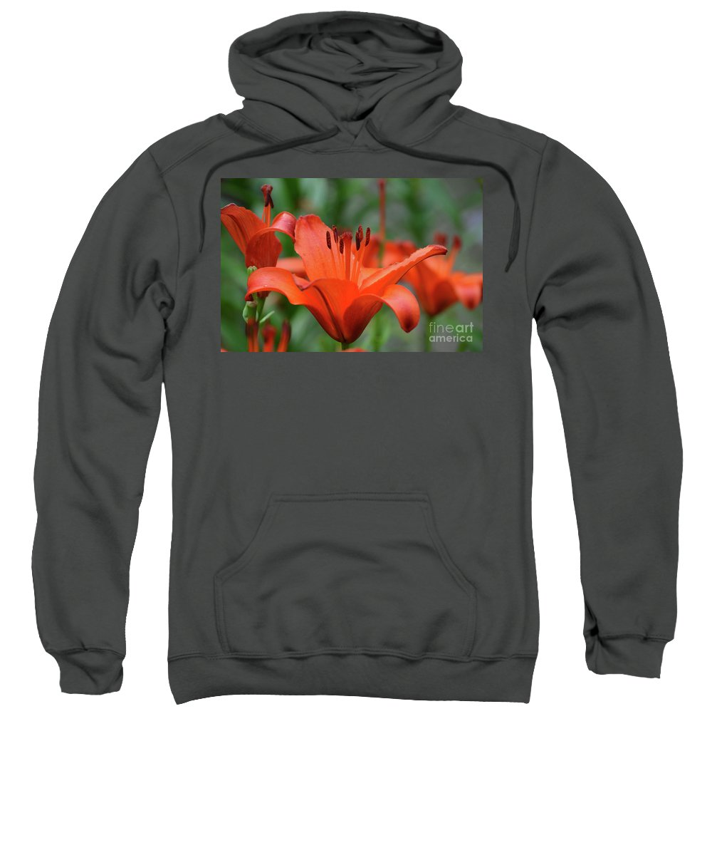 Lily Sweatshirt featuring the photograph Gorgeous Blooming Orange Lily Flowering In A Garden by DejaVu Designs