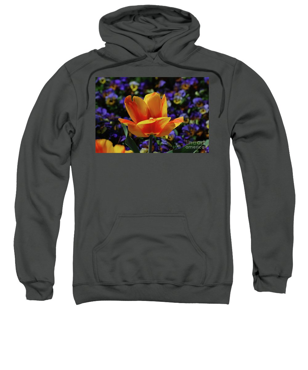 Tulip Sweatshirt featuring the photograph Gorgeous Flowering Yellow And Red Blooming Tulip by DejaVu Designs