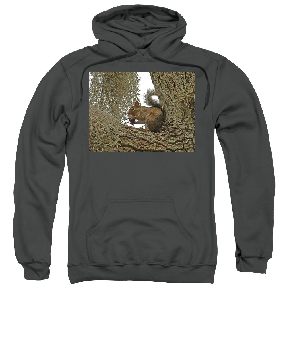 Squirrel Sweatshirt featuring the photograph Gotta Have It by Terrie Stickle