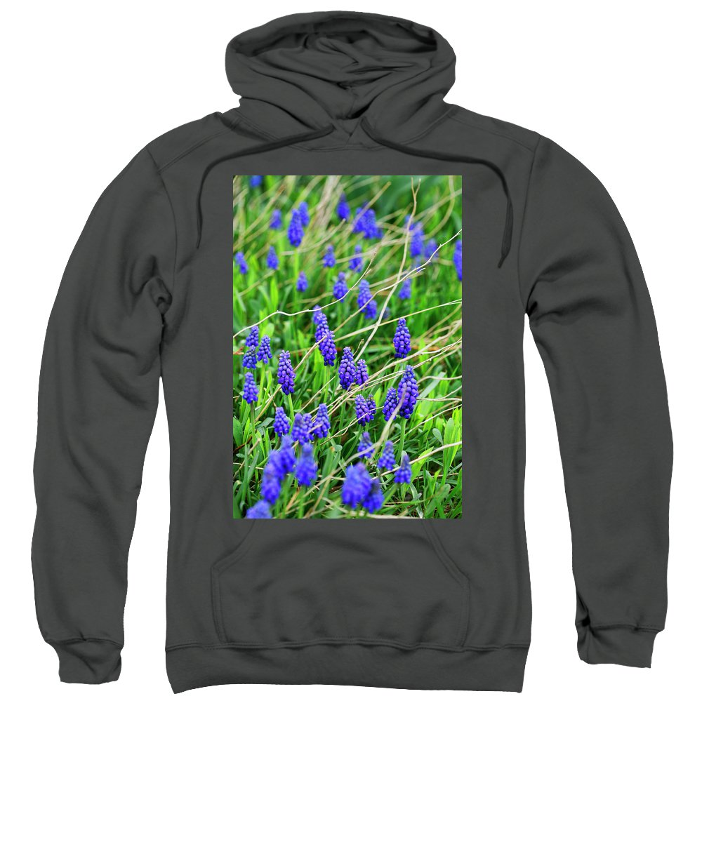 Grape Sweatshirt featuring the photograph Grape Hyacinth by Marilyn Hunt