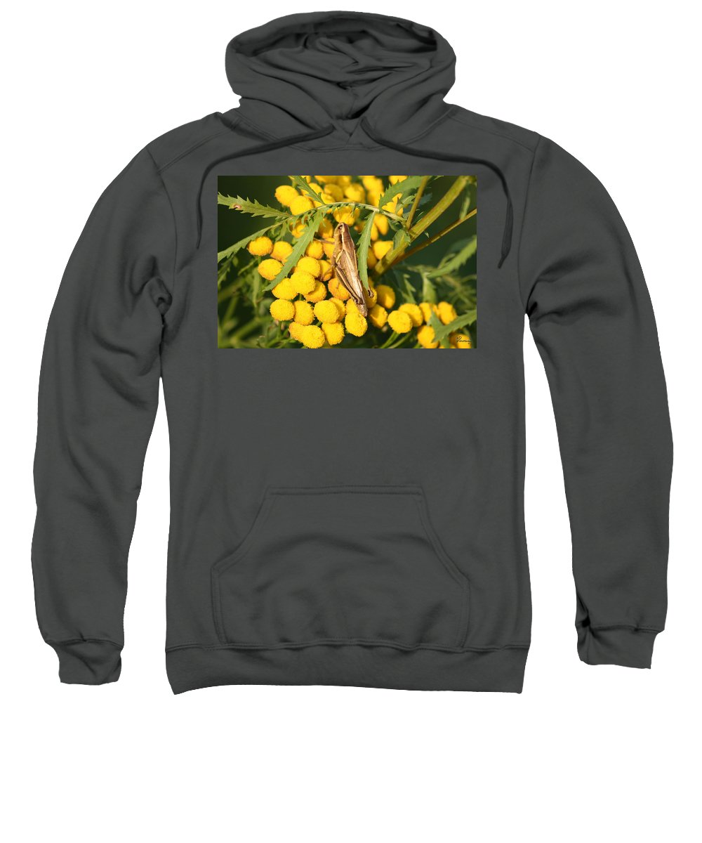 Bug Grasshopper Plants Flowers Nature Yellow Wild Life Green Weed Sweatshirt featuring the photograph Grasshopper by Andrea Lawrence