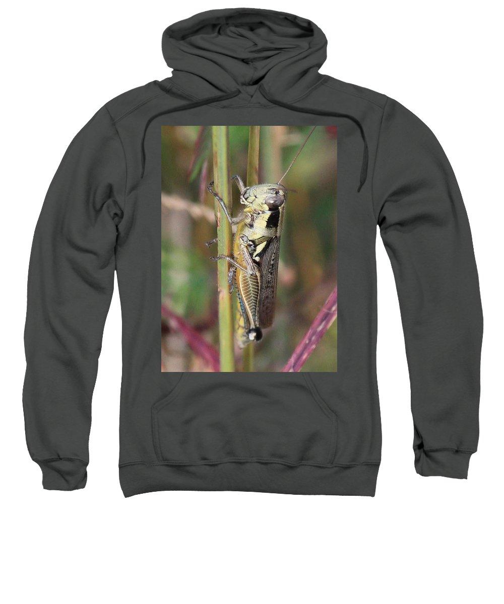 Grasshoppers Sweatshirt featuring the photograph Grasshopper by Carol Groenen