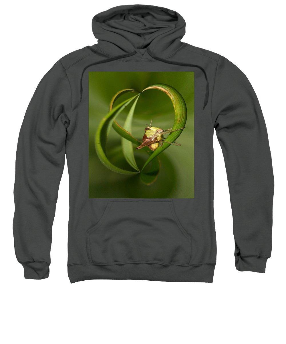 Lehtokukka Sweatshirt featuring the photograph Grasshopper Twist by Jouko Lehto