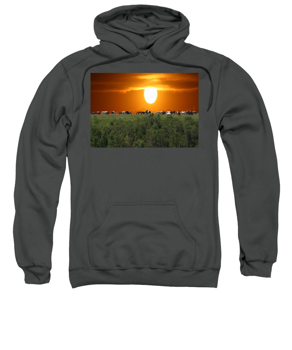 Horses Herd Sunset Grass Trees Nature Animals Scenery Sun Sweatshirt featuring the photograph Grazing by Andrea Lawrence