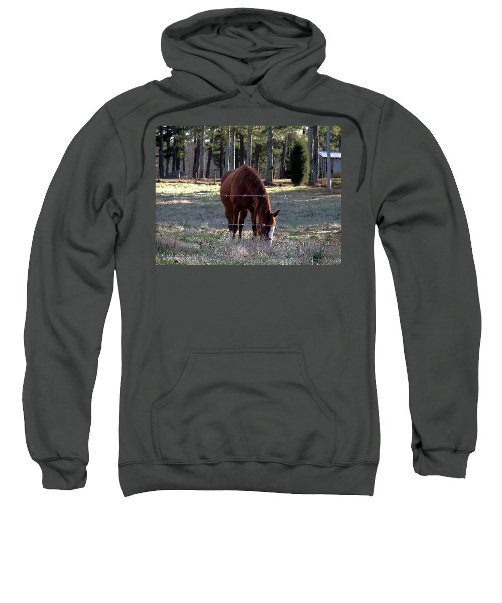 Horse Sweatshirt featuring the photograph Grazing by Robert Meanor