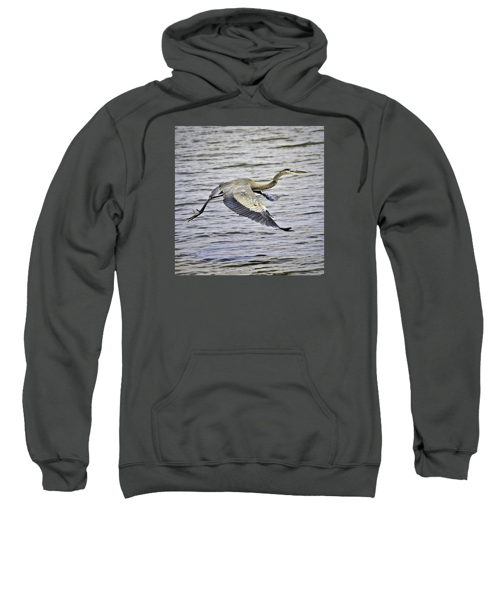 Birds Sweatshirt featuring the photograph Great Blue Heron In Flight by Shutter Click Photography